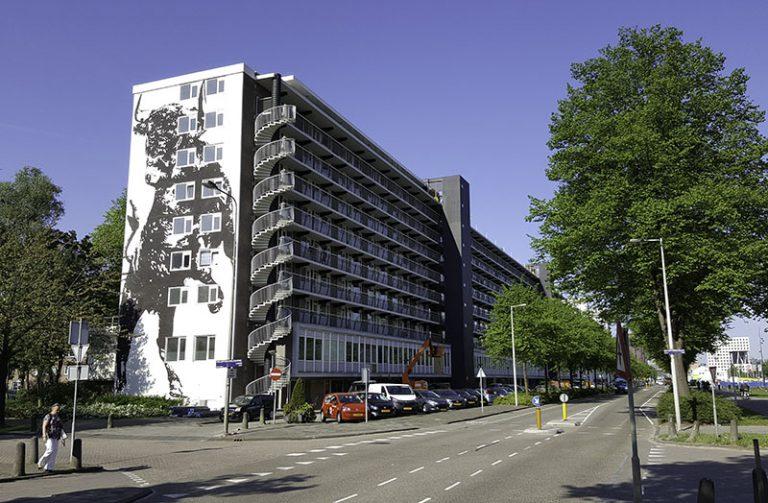 victor_ash_bull_amsterdam_2